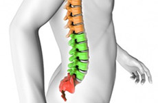 Posture Correction for Lower Spine